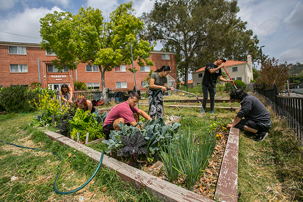 Students work in the Sustainable Urban Farm at Whittier College.