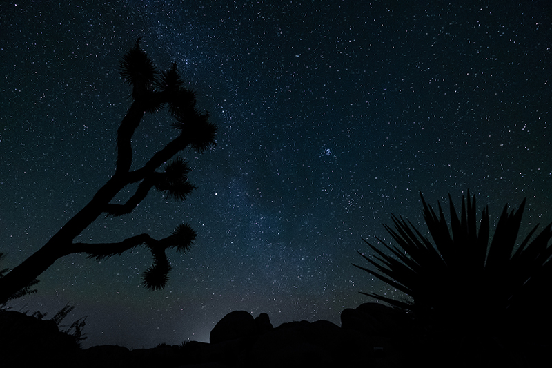 A starry night at Joshua Tree National Park.